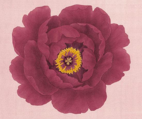 <꽃이 핀다> 백지혜 지음, 보림 펴냄
