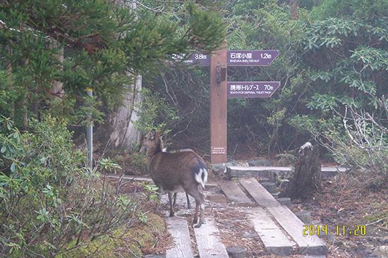 <div align=right><font color=blue>ⓒ김응용 제공</font></div>야쿠시마에서 자주 볼 수 있는 사슴 야쿠시카는 사람을 두려워하지 않는다.