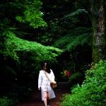 비 오는 날 비 맞으며 걷는 비자나무 숲길