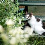 데이터가 들려주는 길고양이의 삶