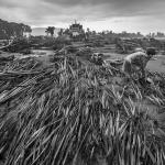 수마가 삼킨 라오스의 한 마을