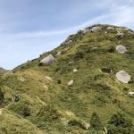 야쿠시마는 '수직 식물원'이라 불린다