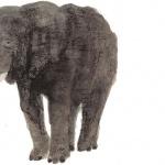 코끼리, 구속적부심을 신청하다