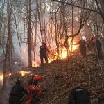 강원 산불 때 지상파 방송이 비난받은 이유