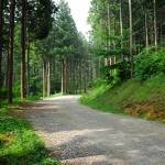 축령산 편백나무 숲은 그의 땀으로 자랐다